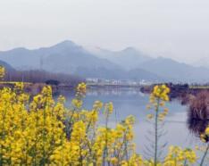 钱江源春季美景