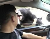 猛兽区开窗投食被黑熊咬 朋友拍下惊险一幕