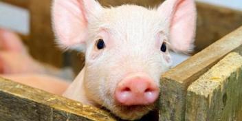 辽宁省锦州市盘锦市发生非洲猪瘟疫情