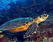 墨西哥海滩发现100多只珍稀海龟死亡