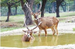 银川海关首次在国际快件中查获濒危动物制品