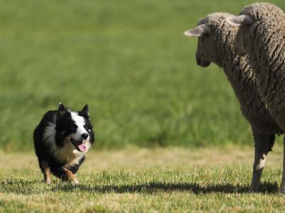 超過14天無人領養犬只可實施安樂死?你怎么看?