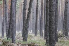 荷蘭教育另類傳統:找個深夜,把小孩丟到森林里