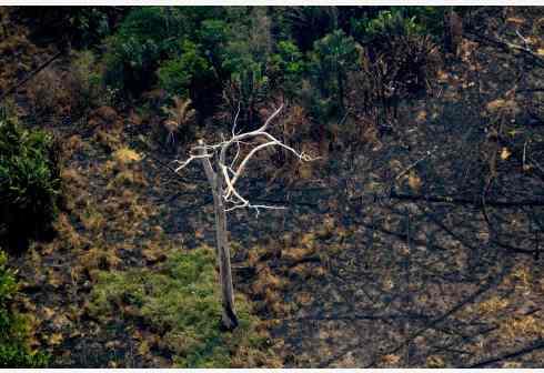 """""""地球之肺""""在燃烧,央视记者探访受灾区"""