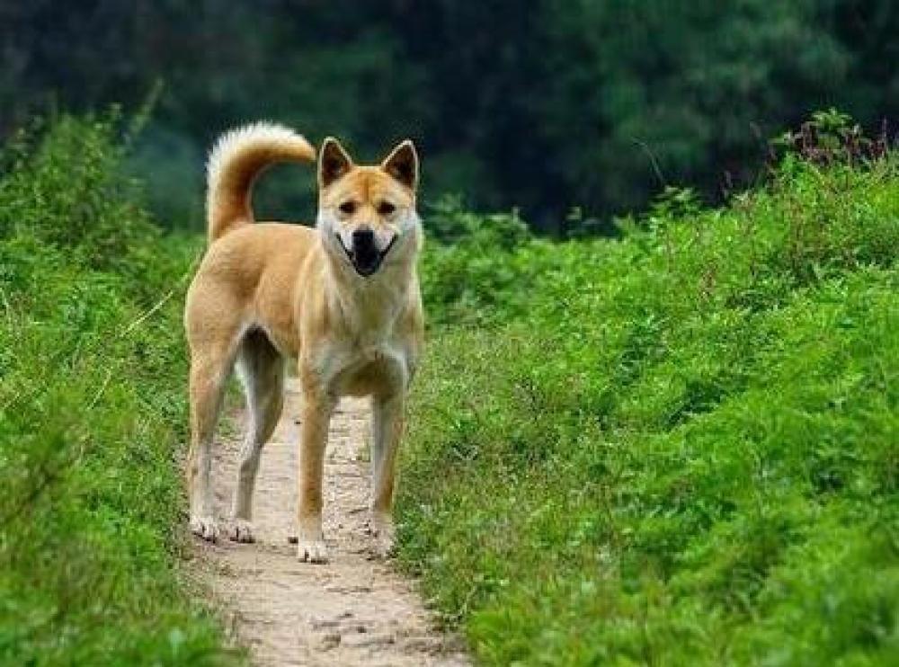 """农业农村部:狗已""""特化""""为伴侣动物 不宜列入畜禽管理"""