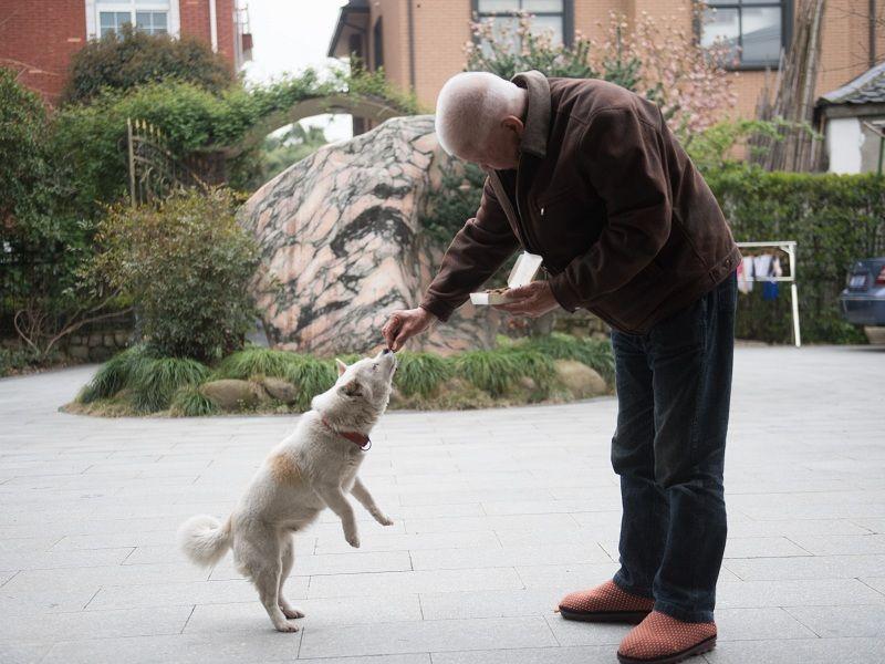 """从野味到宠物:人与自然关系如何""""再平衡""""?"""