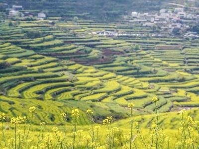 """""""力保""""粮食安全 中国高层部署推进粮食稳产"""