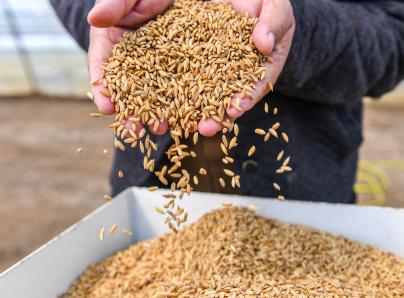 聯合國糧農組織:5月全球食品價格急速攀升